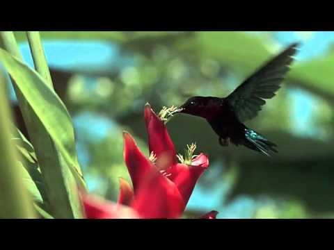 Очень красивое видео!!!!