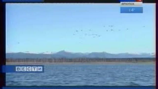 Лебединые озера в Казачинско-Ленском районе, возможно, стану