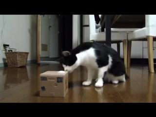 Кот не отходил три дня от игрушки