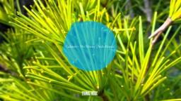 Galantis - No Money (Ardo Remix) (Tropical House Remix)